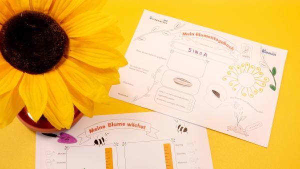 Vorlage für ein Blumentagebuch ausdrucken | Rechte: KiKA