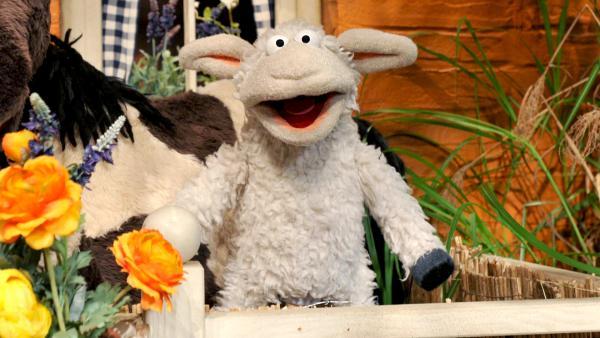 Wolle und Pferd    Rechte: NDR